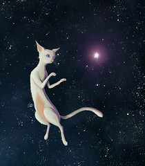 Space Cat (Shmoonify) Tags: cat cats space galaxy cosmic cosmos cosmo kitty kittycat kitten whitecat stars star starry sky skies