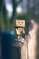 The aventures of Boxy (cline._.photographie) Tags: danbo danboard japanese figure amazon cute amazing photo photography photographie photographer nikon nikond600 passion 18 50mm