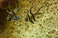Acuario Agosto 2016 (80) (Fernando Soguero) Tags: acuario zaragoza acuariodezaragoza aragn turismo aquarium nikon d5000 fsoguero fernandosoguero