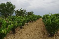 IMGP8532 (Lucifer's Gaze) Tags: pentax k5  spain summer   winery  vinyard  cellar  rioja docarioja  sierradetolono