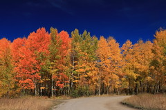 Take a right (alideniese) Tags: grandtetonnationalpark wyoming usa landscape trees autumn fall aspen nature colour road sky blue red yellow color sunny outdoors