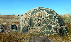 Leprechauns, you breccia (subarcticmike) Tags: subarcticmike arctic tundra breccia volcanic rock stone rollingstone glaciated permafrost rankin inlet nunavut canada oceanside hudsonbay outdoors travel gonetomorrow granite amphibolite leprechaun green angular fragmented armyhelmet 2ft 06m geotagged aol yahoo ios android