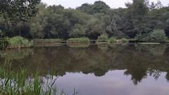 Tibshelf Ponds 2 (Week 10/52) (Mick PK) Tags: tibshelfponds fivepitstrail derbyshire eastmidlands england uk cameraphone samsunggalaxys5 samsung galaxy s5 android hdr trees pond reflection reeds