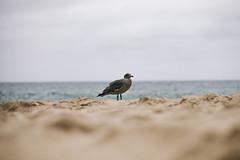 IMG_0935.jpg (Jordan j. Morris) Tags: natural photos picture focus texture summer exposure grain beach light photo jomophoto 5d color snapshot family pic 5dmrkii capture composition lake iso 2016 arrowhead friends