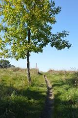 DSC_0067 (North Country Trail) Tags: sheyenne stateforest northdakota hiking