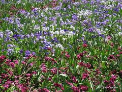 flowery world ( Graa Vargas ) Tags: graavargas flower 2016graavargasallrightsreserved garden budapeste hungria