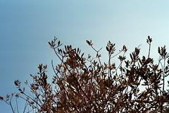 Athen (casthangsba) Tags: filmisnotdead filmphotography filmcamera filmfeed filmcommunity filmisalive filmlover fujifilm fujicolor fujic200 analogphotography analogcamera analog analogue 35mm 35mmphotography 35mmcamera grainisgood istillshootfilm ishootfilm iso200 travel landscape nature athen greece minolta minoltax500
