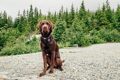 chase-roam-brohm-050716-ajbarlas-7440.jpg (A R D O R) Tags: ajbarlas ardorphotography chase dogs puppy roam
