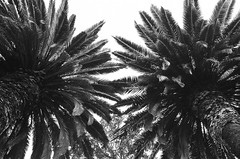 (Benz Doctolero) Tags: canon t50 ilford hp5 400 bw monochrome film street vegetation trees sacramento california 50mm