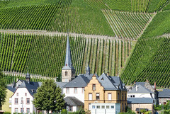 Graach (CORMA) Tags: allemagne deutschland germany moselle mosel 2016 europe europa graach vignoble weinberg vineyard