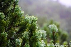 IMG_3423 (The Mitz Photography) Tags: gams grünersee hochschwab mariazell maryclan murmerl mädels nebel pilgern sommer steinbock wandern