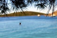 Point of view (Veruuuu) Tags: see spider mare ragno barca boat nature natura verde pini pine ragnatela blue