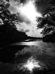 crazy reflection (Darek Drapala) Tags: crazy bw blackwhite blackandwhite silkypix nature panasonic poland polska panasonicg5 park clouds reflection reflects warsaw warszawa water waterscape dark lumix light landscape