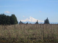 Mt Hood (Lynne Fitz) Tags: bicycle oregon sweetpea 100k permanent populaire randonneur