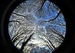 Trees (alyrees) Tags: life park camera uk blue trees light england sky brown sun fish playing black west tree eye nature up leaves clouds dark circle bristol lens photo leaf nikon view natural bright south picture fisheye fields below worms dslr photgraphy dundridge d3100