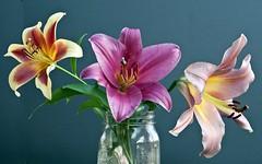 Lily Still Life 2 (Pandalexky) Tags: summer flower garden studio lily scenic jar vase pastoral dougprather