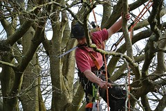 Brendan The Woodcutter (Livesurfcams) Tags: chainsaw devon arborist stihl handsaw treesurgeon stilh copperbeachtree nikonv1