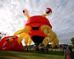 Claw'd the Crazy Crab at Balloons Over Waikato (Jaime Carter) Tags: morning red newzealand lake yellow basket sunday balloon hamilton crab waikato balloonsoverwaikato lakerotorua 2013 jaimewalsh innescommon jaimecarter balloonsoverwaikato2013 claw'dthecrazycrab