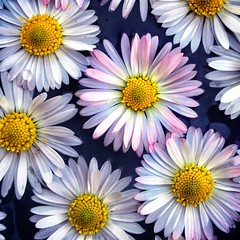 White carpet (Luc1659) Tags: flowers macro fiori margherite tappeto mygearandme mygearandmepremium mygearandmebronze mygearandmesilver mygearandmegold vigilantphotographersunite vpu2 vpu3 vpu4 vpu5 infinitexposure