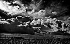 Eastern Frisian Clouds (Explored) (chmeermann | www.chm-photography.com) Tags: sky bw plants nature field clouds germany landscape deutschland blackwhite nikon scenery natur pflanzen feld dramatic himmel wolken ostfriesland sw nikkor drama schwarzweiss landschaft norddeutschland northerngermany eastfrisia 18135 dramatisch d80 easternfriesland