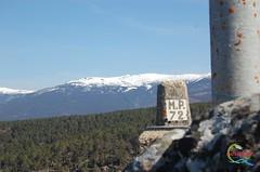 Sierra de Urbin desde el Pico Maran (Historia de Covaleda) Tags: espaa spain fiesta paisaje douro pinos soria historia pinar tradicion duero covaleda