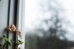 RAINDROPS (juliasvanqvist) Tags: rain weather cloudy rainy raindrops