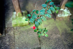 (*D21) Tags: china leica autumn color film 35mm 2012 trave leicamp kodakektar100 epsongtx970 云南腾冲 leicasummliuxm3514asph yunnantengchong