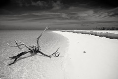 Long way from Home (stevec77) Tags: sea sky blackandwhite beach water sand branch lagoon cookislands aitutaki d90