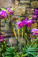 purple orchids with cultured stone background (AgFineArtPhotography.com) Tags: pink summer white black orchid flower nature water beautiful beauty rock stone relax photo spring healthy flora peace natural background space details decoration vivid surface fresh petal health zen tropical bloom meditation therapy oriental relaxation spa isolated wellness copyrighted
