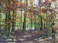20130505_164203 (MelisaTG) Tags: cameraphone trees woods urbanwoods greenleafs