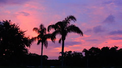 Sunset Color (Jim Mullhaupt) Tags: trees sunset color clouds sunrise palms spring flickr florida bradenton mullhaupt jimmullhaupt