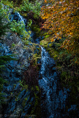 Hidden in the Shadows (Culinary Fool) Tags: november autumn canada fern tree fall water rock vancouver creek waterfall stream bc seasons britishcolumbia quarry queenelizabethpark 2014 culinaryfool 2470mm28 brendajpederson