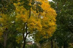 L3006808 (sswee38823) Tags: street leica city trees tree fall leaves boston garden photography 50mm fallcolors newengland apo summicron 50 bostonma leicacamera bostonpublicgarden bostonpublicgardens summicron50mm leicam aposummicron leicamtype240 summicron50mmapo aposummicron50 leicaaposummicronm50mmf2asphfle aposummicronm1250asph leicaapo502 50aposummicron leica50apo