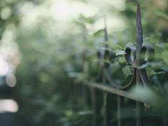 """The """"secret garden"""" fence edition - HFF (pierfrancescacasadio) Tags: fence hff se1 50mm f14 o"""