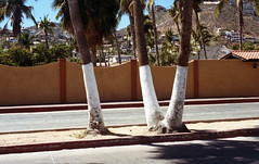 White Trunks (b.keelerfoster) Tags: cabosanlucas bajacaliforniasur mexico film 35mm