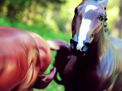 Wild Horses (Cookie Face Stables) Tags: performance scene halter realistic breyer mepsa modelhorse