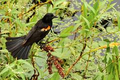 Far From the Noise of the City (Terri Toll) Tags: bird animal d610 florida nikon nature wildlife