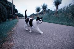 Netherlands Alphen Cat (K. McMahon) Tags: europe summer nederland netherlands alphenaandenrijn alphen aan den rijn cat