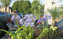 Roof garden (chericbaker) Tags: roofgarden roofterrace agapanthus
