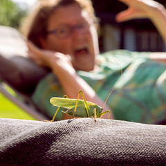 Grasshopper (*hassedanne*) Tags: 10 grasshopper frightening monster green closeup bug insect sliderssunday hss