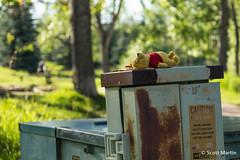 Tanning Pooh (Scott Martin Calgary) Tags: calgary alberta canada fishcreekprovincialpark pooh poohbear electricalbox