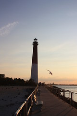 A winged visitor to the Old Barney! (maxj75) Tags: lighthouse dusk nj newjersey njoceancounty barnegat barnegatlight