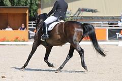 IMG_7553 (dreiwn) Tags: dressage dressur dressuur pferd reitturnier turnierreiten pferdesport horse horseback horseriding equestrian reitverein dressurprfung kandare doublebridle reiten pferde reitplatz ridingarena