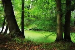 Les sous-bois au début de l'automne (mamietherese1) Tags: earthmarvels50earthfaves phvalue phoeniximmortal