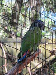 """Le Parc des Oiseaux d'Iguaçu: des perruches <a style=""""margin-left:10px; font-size:0.8em;"""" href=""""http://www.flickr.com/photos/127723101@N04/29531299242/"""" target=""""_blank"""">@flickr</a>"""
