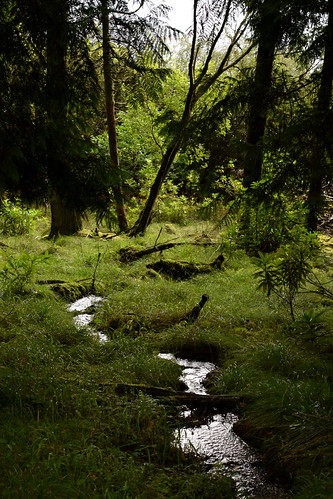 Caladh Forest Stream