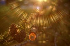 Mlze (Patrice StG) Tags: sony nex3n bokeh flare reflets reflection reflexion sun soleil vintage vintagelens mlze larch gimp tonemapping luminancehdr qubec