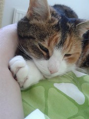 You are mine and I am yours... (huoneenhaltijakissa) Tags: nature animal pet cat kitten misu morning raahe finland tenderness love