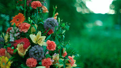 The beauty of summer (Rind Photo) Tags: flowers colours summer catchy yellow blue red green bokeh nikkor macro