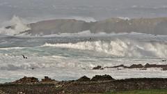 Morning Breakers  IMG_5661 (Ronnierob) Tags: stormyseas quendalebay shetlandisles